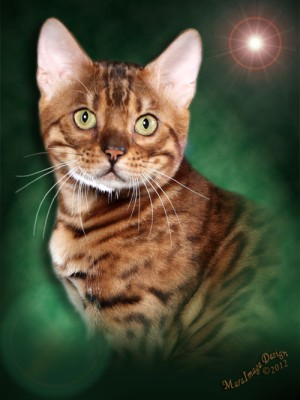 Bengal cats photos 06