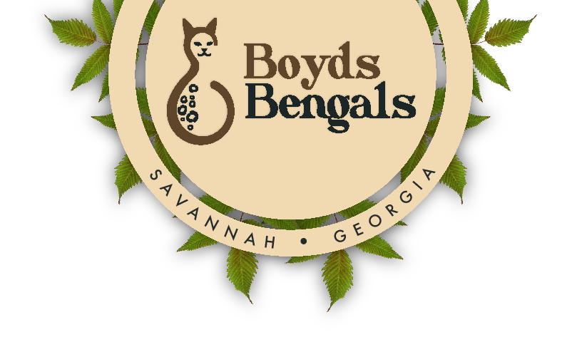 BoydsBengals is a small in-home cattery in Savannah