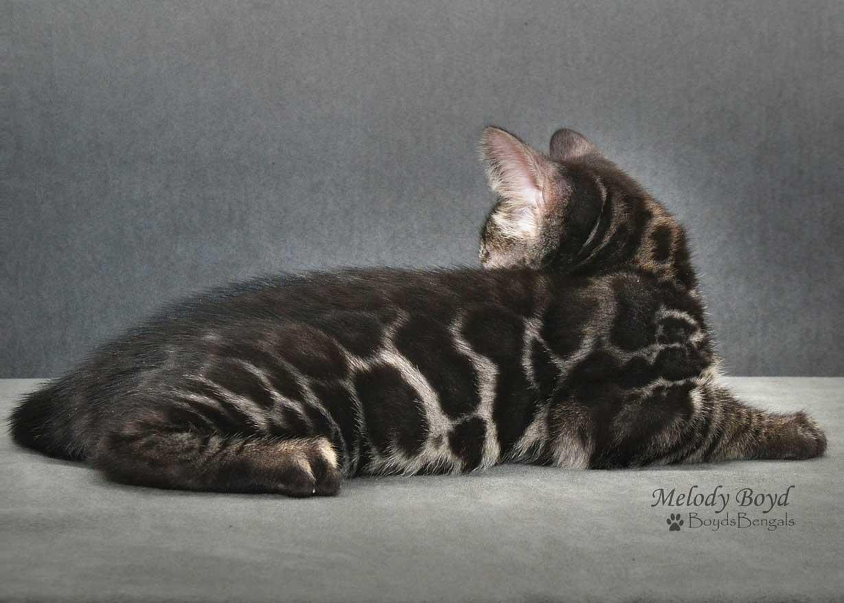 cat behaviour tail down