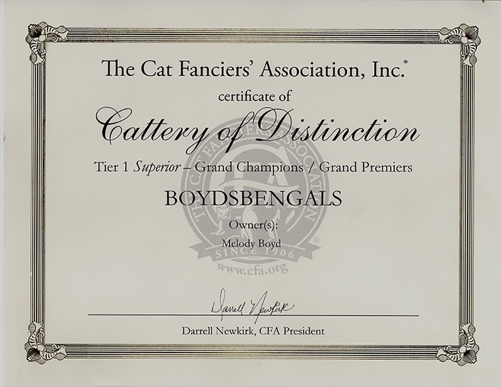 BoydsBengals – CFA's first Bengal Cattery of Distinction