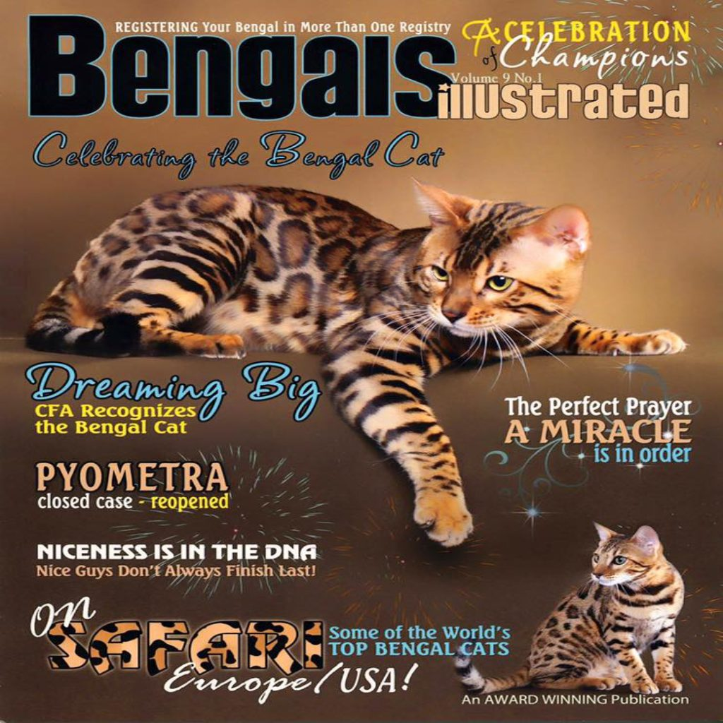Bengal Kittens for Sale in Georgia | Breeder Brown, Silver, Snow